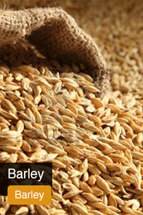 Product Barley Yellowrock